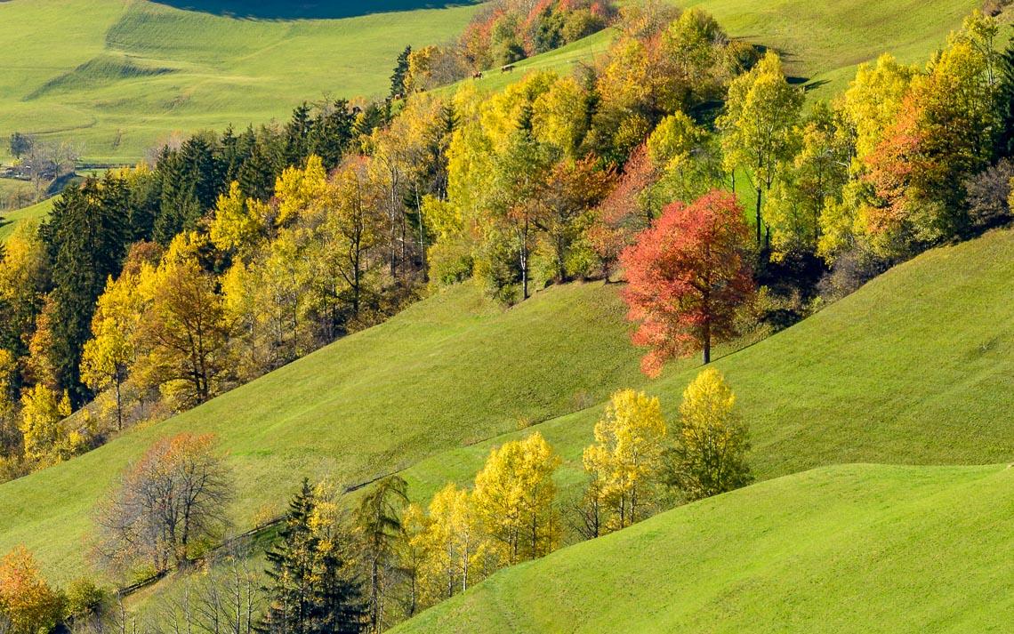 dolomiti foliage autunno nikon school workshop paesaggio notturna via lattea startrail 00003