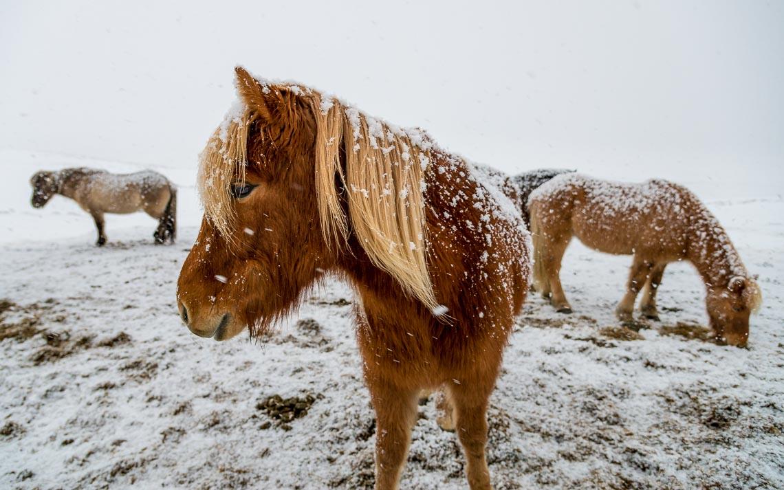 islanda nikon school viaggio fotografico workshop aurora boreale paesaggio viaggi fotografici 00053