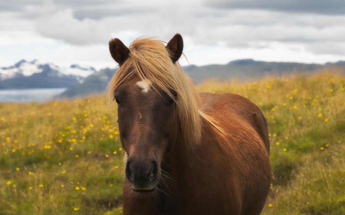 Islanda Nikon School Viaggio Fotografico Workshop Aurora Boreale Paesaggio Viaggi Fotografici 00090
